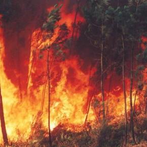 ¿Qué puedes hacer para evitar incendios forestales?